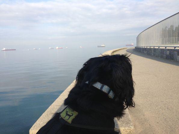 marco watching ships